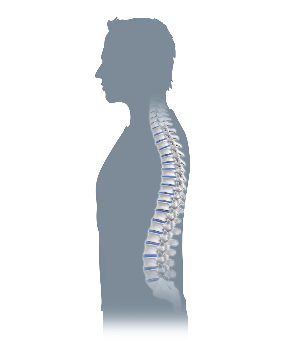The spine and its effects on the rest of the body